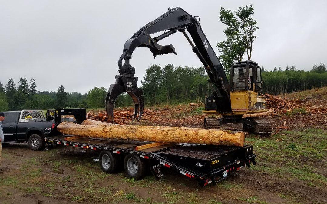 Logs 1